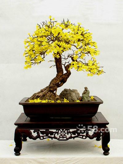 ,请欣赏 桩材交易区 盆景乐园 中国最大最专业的盆景艺术交流平台