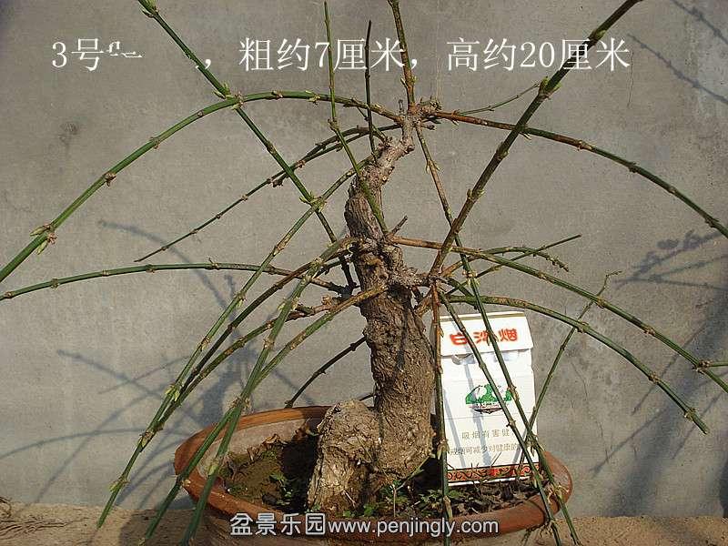 .26号 桩材交易区 盆景乐园 中国最大最专业的盆景艺术交流平台